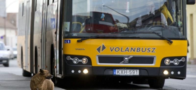 Az Ikarus gyárthatja a Volán új buszait