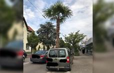 A napfénytetőn lógott ki az autóból egy ötméteres pálma