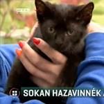 Sokan szeretnék örökbe fogadni a megkínzott cicát
