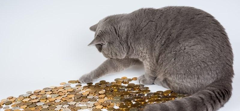 Rendkívüli szociális ösztöndíj: mikor igényelhetitek?