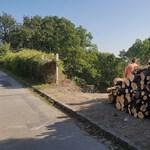 Vágják a fákat a II. kerületben is