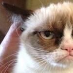 Szerzői jogi pert nyert, és egy vagon pénzt kapott egy macska