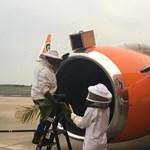 Videó: 20 ezer méh akadályozta meg, hogy felszálljon a Mango Airlines utasszállítója