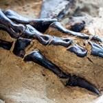 Több mint 240 dinoszaurusz-lábnyomot fedeztek fel Kelet-Kínában
