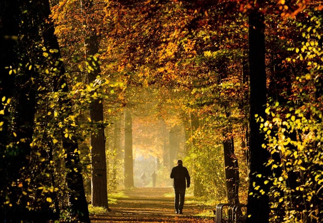 epa.14.11.17. - Hannover, Németország: férfi sétája az őszi színekben pompázó fák alatt az Eilenriede erdőben - erdő, ősz, fa, fák, séta, 7képei