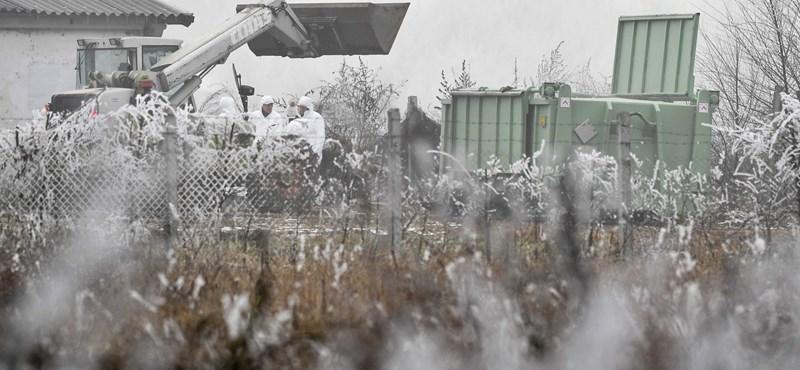 Nébih: már nem kötelező zártan tartani a baromfikat
