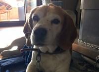 Rendőrök mentették meg az árokparton fekvő, hőgutát kapott kutyát