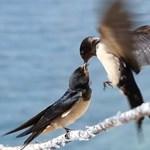 Megfogyatkoztak a rovarevő madarak Európában