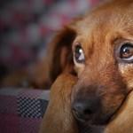 Utcára kerültek a kutyák, akikről azt ígérte az önkormányzat, menhelyre viszi őket