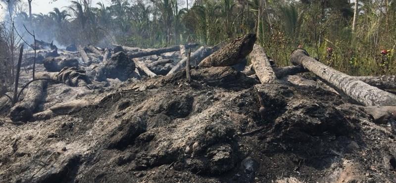 Az esőnek sikerült eloltania az esőerdőket két hónapja pusztító tüzeket