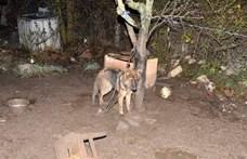 Szörnyű körülmények közül mentettek ki egy kutyát a veszprémi rendőrök