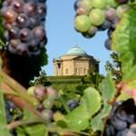 Villamossal a szőlőbe – ilyen a nagyvárosi borászkodás