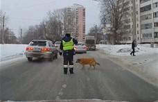 Videó: sánta kutyát jobb, ha a rendőr kíséri át az úttesten