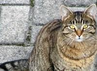 Fagyállós tejjel, gombostűdarabokkal ölhetik a macskákat Felgyőn