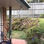 Próbálja ki az ausztrálok kedvenc mókáját: megtalálja a kígyót a képen?