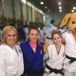 Bol-dog beájulna: itt a budapesti dzsúdóvébé kabalája