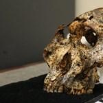 Izgalmas lelet: 2 millió éves koponyát találtak