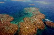 Egyre súlyosabb a helyzet a Nagy-korallzátonyon