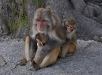 Majmok garázdálkodnak az indiai kormány hivatalaiban