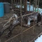 Bezárt kennelben hagyta halálra fagyni a vizsláját – megrázó fotók