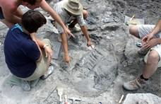 Magyar kutatók vizsgálták, hogyan viselkedhettek a dinoszauruszok, és érdekes eredményre jutottak