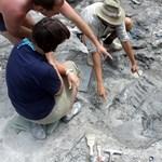 Új dinoszauruszfaj további csontjait azonosították a Bakonyban