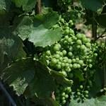Az összefogás, mint sikerrecept - borszomszédság