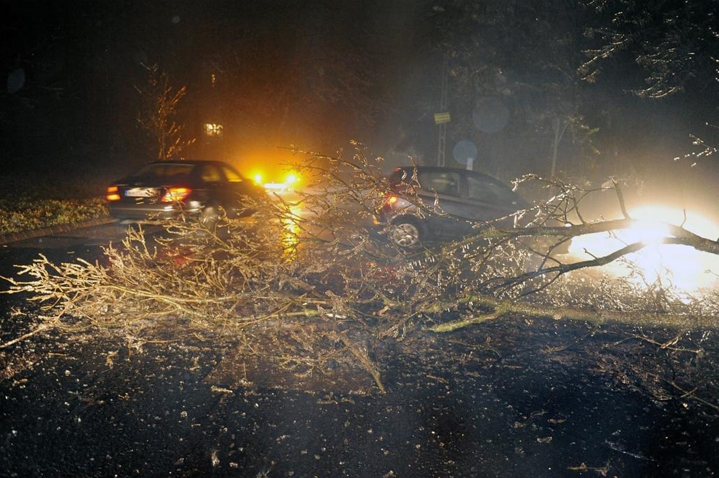 mti. ónos eső, 2014.12.01. tél 2014, Leszakadt faágak akadályozzák a forgalmat a XII. kerület egyes részein