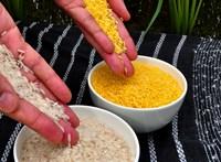 Odacsapna a magyar agráriumnak egy francia GMO-s törvénymódosítás