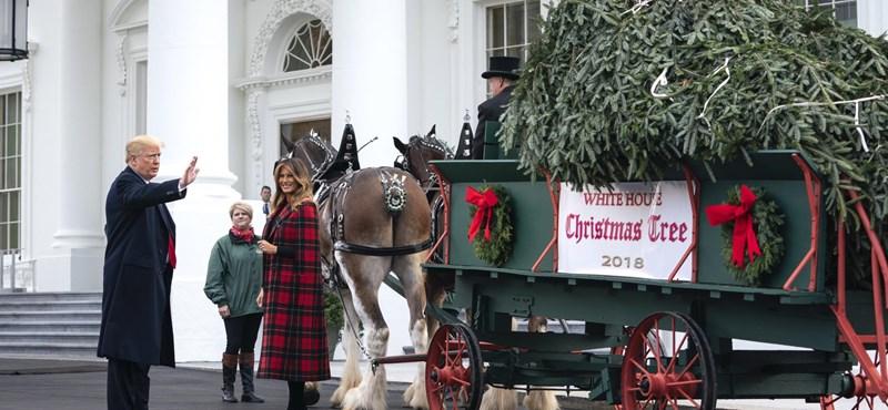 Trump átvette a Fehér Ház óriási karácsonyfáját, de mintha nem tetszene neki – fotók