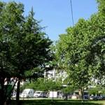 Újabb famatuzsálemet költöztetnek a Városligetben