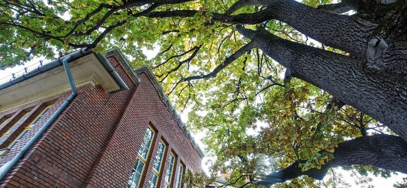 Nap képe: egy kaposvári iskola udvarán áll az év fája