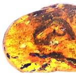 Kikelt egy kis kígyó a tojásból, aztán 99 millió évre borostyánba ragadt