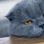 Gond van a macskával? Hívjon pszichológust!