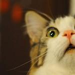 Megcsinálták minden macskagazda álmát: íme az öntisztító cicavécé
