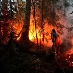 Oroszországban ismét erdőtüzek pusztítanak