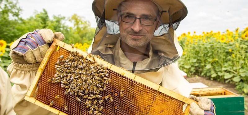 A Nemzet Napszámosa: Tóta W. és hétmillió méhecske