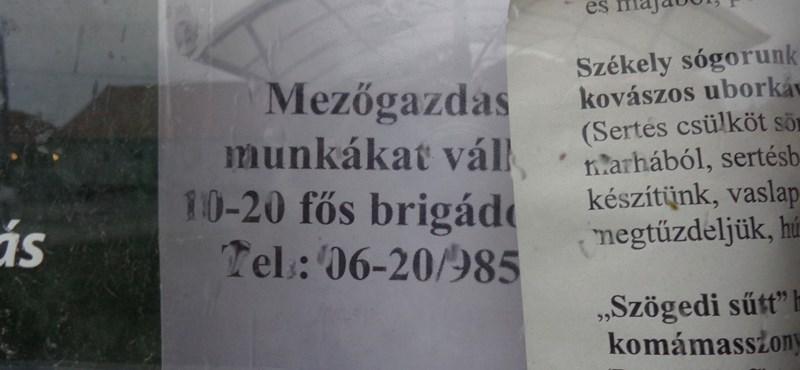 Van munka, hát, jöttünk – romániai napszámosok Magyarországon