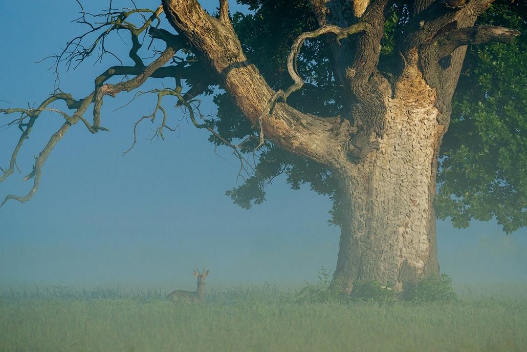 NE_! - V. Állatok és környezetük - 3. díj  és a FOTOWORKSHOP különdíja - Az öreg tölgynél - Az Év Természetfotója 2014, nagyítás