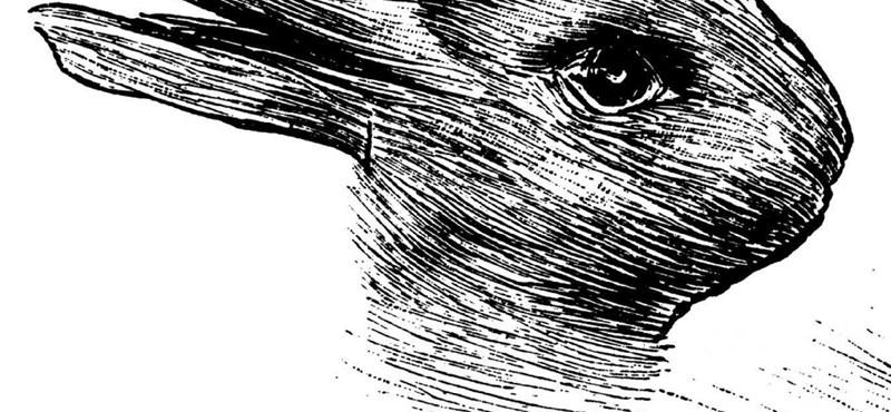 Ismeretlen eredetű nyúlhúst találtak – videó