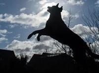 Sok tragédia egyike lesz, vagy áttörést hoz az autó után kötött kutya pusztulása?