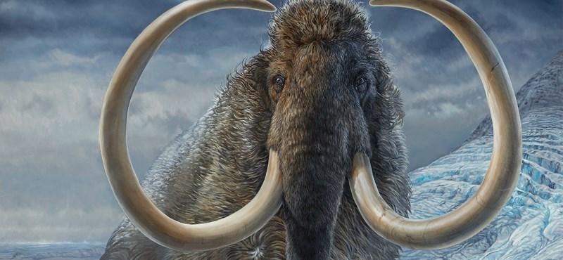 Examinaron los restos del mamut que murió hace 17.100 años y descubrieron mucho sobre él.