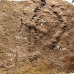 Találtak egy 541 millió éves lábnyomot