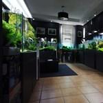 Így lehet burjánzó fűszerkertje halpiszokból