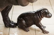 Krimit forgatnak a Nyíregyházi Állatparkban