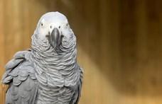 Annyit káromkodtak a papagájok, hogy nem bírtak velük a gondozók