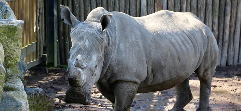 Orrszarvú támadt egy kétéves gyerekre egy floridai állatkertben