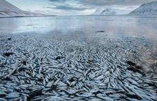 Soha nem látott halpusztulás veszélyére figyelmeztetnek természetvédők