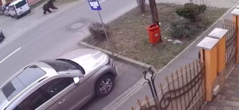Medve szaladgált Segesvár utcáin – videó