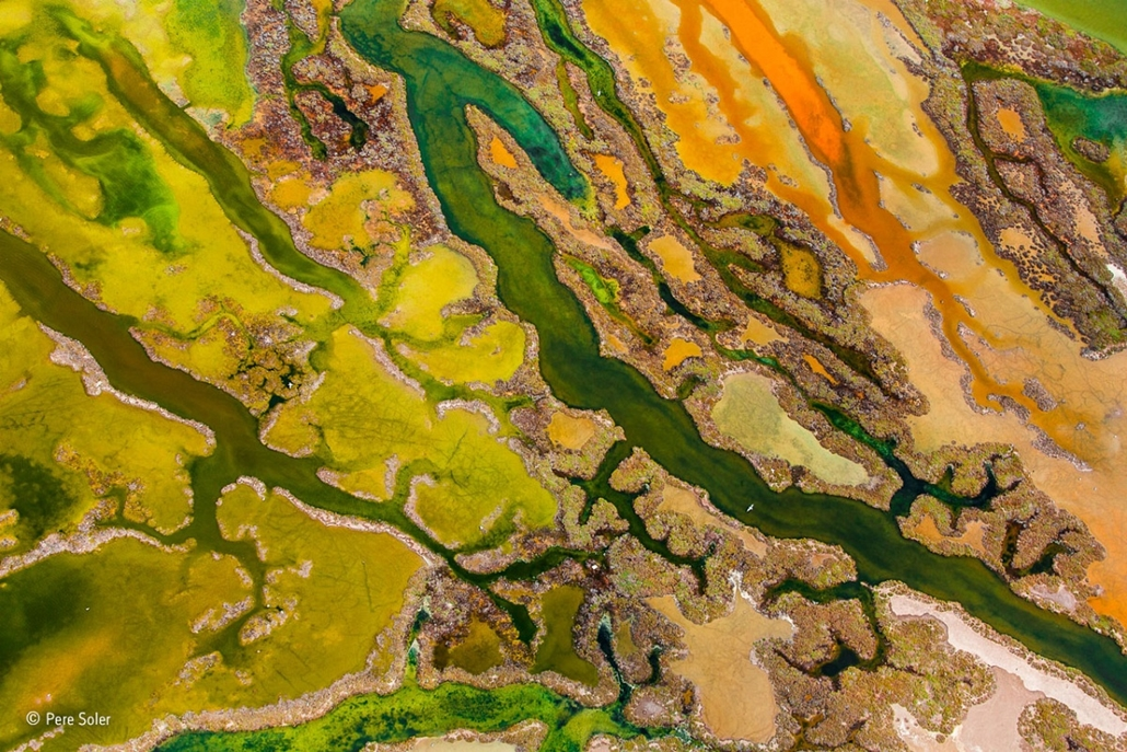 NE HASZNÁLD!!!!!!!!! - Wildlife Photographer of the Year,Pere-Soler- From the Skies